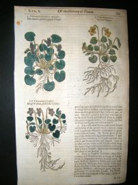 Gerards Herbal 1633 Hand Col Botanical Print. Purple, Yellow & Dog's Violet